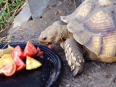 Yummy veggies and fruit