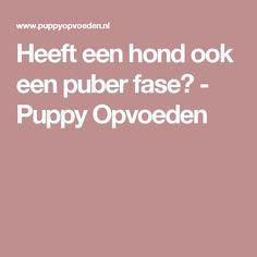 Heeft een hond ook een puber fase? - Puppy Opvoeden