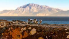 El Campo de Gibraltar que no aparece en 'El Niño'