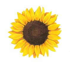 Sunflower Tattoos | Sunflower Tattoos.....