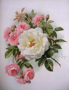 Victorian Rose Prints Gallery : Victorian Morning Roses Print Paul de Longpre Rose