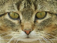 Cat Face Macro Fine Art Photography by Fischerimages on Etsy, $5.95