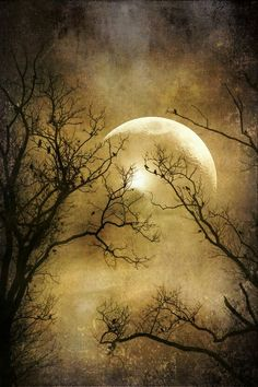 Bad Moon on the Rise ⊰❁⊱