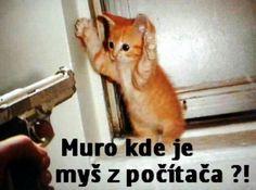 Funny Memes, Jokes, Humor, Lol, Animals, Animales, Husky Jokes, Animaux, Humour