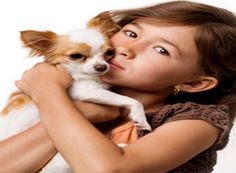 Chihuahua Training: Learn All About Training Chihuahuas & Taking Care of Them