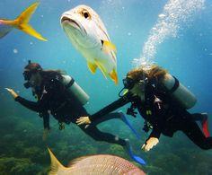 Great Barrier Reef   #greatbarrierreef #cairns #australia #scubadiving #diving #couple #sea #loveandlemons #fish #blub #adventuretime #traveling #soexcited #firsttime #wordscantdescribe #stunning by jordanafrank http://ift.tt/1UokkV2