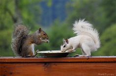 """Dinner for Two.""  (credit, NWF photo contest entrant Mark Turnau)"