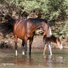 Top 10 Beautiful Salt River Wild Horses