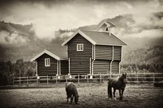 Horses and wooden storehouse by Lidia, Leszek Derda on Cabin, Horses, Black And White, House Styles, Home Decor, Decoration Home, Black N White, Room Decor, Cabins