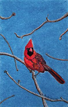 "©2012, Magda de Lange, ""Red Cardinal"", Pastel on Paper, 42x28.5 cm  Available at http://www.magdasart.com"
