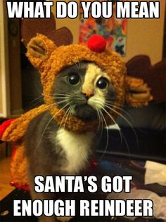 Santa's got enough Reindeer. Cute and funny kitty cat quotes. Tap to see more funny animals quotes! Crazy Cat Lady, Crazy Cats, Funny Animal Pictures, Funny Animals, Baby Animals, Funniest Animals, Pet Pictures, Cute Animals With Funny Captions, Silly Pictures