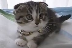 Quite Possibly The Cutest Kitten Video In The History Of The Internet