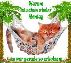 dreamies.de Germany, Cool Stuff, Floral, Animals, Cute Baby Animals, Animaux, Flowers, Animal, Animales