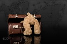 Travel Bear - Bear looking into a vintage suitcase