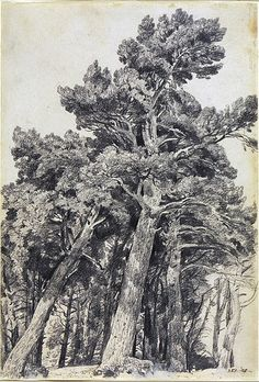John Constable, 'Fir Trees at Hampstead', Museum no. John Constable 'Fir Trees at Hampstead' Great Britain 1820 P. Realistic Drawings, Easy Drawings, Pencil Drawings, Tree Drawings, Landscape Drawings, Landscape Paintings, Henri Matisse, Tree Sketches, Gravure
