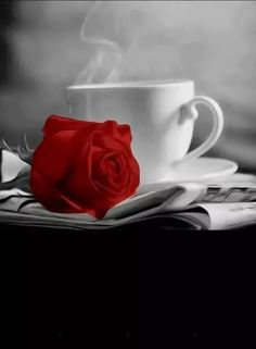 Coffee cup and red rose black and white photo