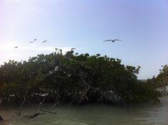 Cayo Arcas México #natural #hábitat #birds