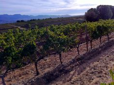 Atardece en Finca Malaveïna Costa, Most Beautiful, Beautiful Places, Vineyard, World, Outdoor, Growing Up, Wine, Outdoors