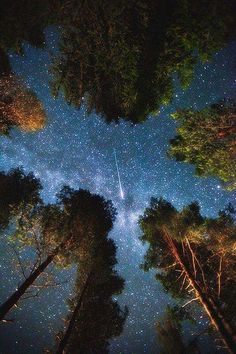 Night sky and shooting star. Seen from a forest floor, through a canopy break in the trees.