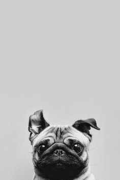 Dog wallpaper iphone, wallpaper plus, hipster phone wallpaper, cute dog wallpaper, Wallpaper Iphone7 Plus, Dog Wallpaper Iphone, Cute Dog Wallpaper, Hipster Phone Wallpaper, Animal Wallpaper, Homescreen Wallpaper, Wall Wallpaper, Funny Animals, Cute Animals