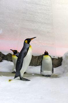 Penguins - Sealife Melbourne Aquarium