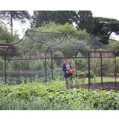 Large steel fruit cage which is perfect for growing fruit or vegetables on a large plot.