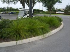 lomandra breeze front square at corner by street