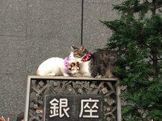 at Ginza