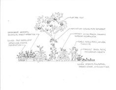 Plum Tree Guild: Listed on the image are the plants and their functions. Each plant provides a service for the other plants in the guild as well as for the gardener.