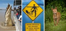 Warnings Crocodiles, Stinger Jelly Fish and Dingoes