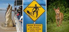 Warnings Crocodiles, Stinger Jelly Fish and Dingoes Jelly Fish, Coast Australia, Adventure Activities, Crocodiles, Self Driving, Great Barrier Reef, East Coast, Touring, Crocodile