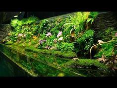 A paludarium is a type of vivarium that incorporates both terrestrial and aquatic elements. Planted Aquarium, Aquarium Terrarium, Aquarium Aquascape, Aquarium Landscape, Reptile Terrarium, Vivarium, Paludarium, Aquascaping, Aquarium Design