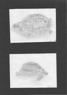 Turtles - Pencil drawings / Schildkröten - Bleistiftzeichnungen / Tartarughe - Disegni a matita #animals #tartaruga #turtle #schildkröte #art #pencildrawing #drawing #zeichnung #disegno Pencil Drawings, Animals, Tortoise Turtle, Good Photos, Photo Illustration, Children Drawing, Animales, Animaux, Animal Memes