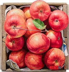 사과 그림만 그리는 작가? 윤병락의 사과 그림 : 네이버 블로그 Watercolor And Ink, Watercolor Flowers, Watercolor Paintings, Fruits Photos, Apple Art, Still Life Drawing, Fruit Photography, Color Pencil Art, Food Drawing