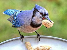 6 Dicas irresistíveis para atrair passarinhos no jardim - Jardineiro.net