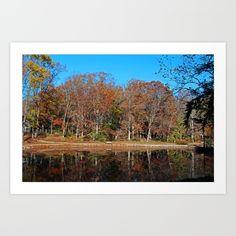 oak openings, park, toledo, ohio, trees, nature, autumn, fall, foliage