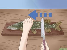 How to Clean and Fillet a Northern Pike. The pike is an excellent eating fish, but it is so bony that it scares off many fishermen. By removing the Y-bones you make a good meal even better. The technique for getting the Y-bones out of. Fish Patties, Small Hinges, Off The Bone, Fillet Knife, All The Way Down, In The Flesh, Invite Your Friends, Cleaning, Pictures