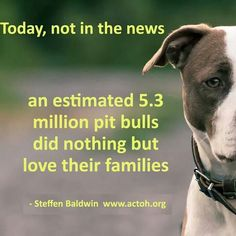 truth! #pitbulls