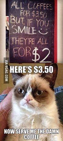 This cat makes me laugh