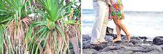 SHERLYN   NORMAN ON POIPU BEACH IN KAUAI, HAWAII