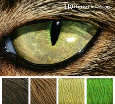 Cat Eye Color Palette. Gracie.