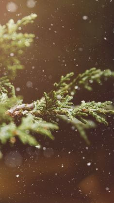 Branches Snow Flare Leaves  #iPhone #5s #wallpaper