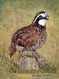 Bird Art Repro Made in U.S.A Giclee Prints Quail by American Arthur Tait