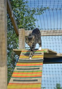 Cat house or catio? This outdoor space in Madison County is cool for cats