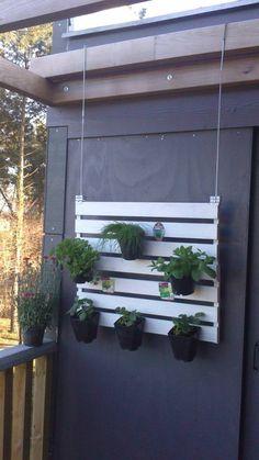 #Balcony, #RecycledPallet, #VerticalGarden