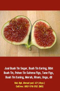 khasiat buah tin untuk diabetes cure