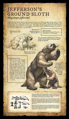 12984042_285713008427273_4314969307702482024_o.jpg 600×1,029 pixels Ground Sloth, Dinosaur Fossils, Natural History Museum, Animal Drawings, Prehistoric Man, Prehistoric Wildlife, Prehistoric Creatures, Welt, Ice Age