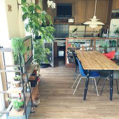 ペットと暮らす家/エバーフレッシュ/ラダー/IKEA/イームズ/ルイスポールセン…などのインテリア実例 - 2015-07-13 10:42:33 | RoomClip(ルームクリップ) Studio Kitchen, House Plants, New Homes, Dining Room, Interior Design, Architecture, Outdoor Decor, Table, Furniture
