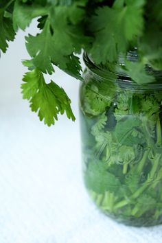 cilantro, btw if you keep in a vase like fresh flowers....it will last longer than in the fridge :-)