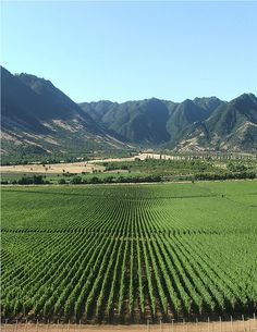 Colchagua Wine Valley | Chilie